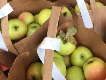 apples for sale at orchard spooner wisconsin sold from cabin shed