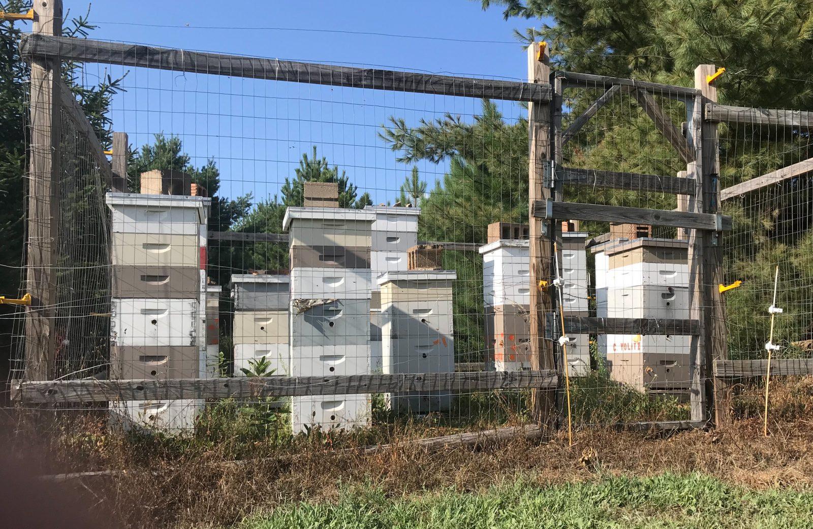 beehives at McKenzie Orchard in Spooner Wisconsin