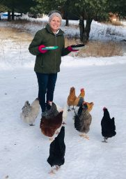 feeding chickens in spooner wisconsin eggs for sale from cabin shed
