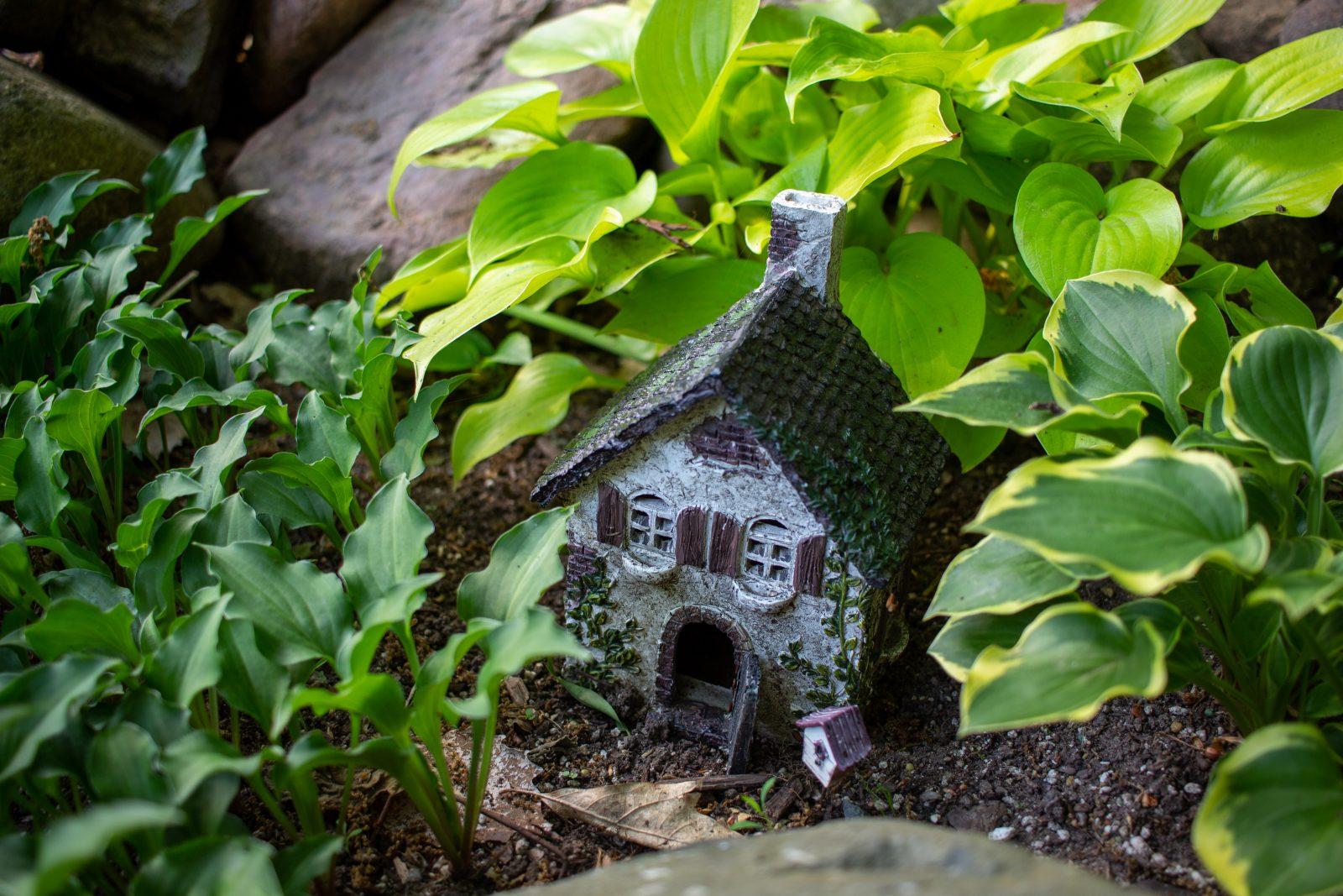 hostas in she shed garden in wisconsin